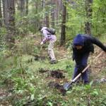 Засаждане на фиданки от бяла елша по поречието на Куртова река