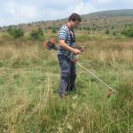 Лалугерите се нуждаят от ниска трева, затова трябва да се коси редовно