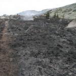 Опожарени площи