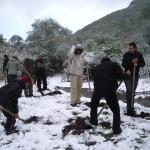 Засаждане на фиданки от бяла върба по поречието на река Струма